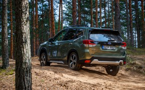 Picture Subaru, crossover, coniferous forest, Forester, 2019