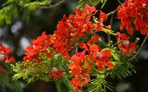Picture greens, leaves, light, flowers, branches, bright, blur, orange, flowering, bokeh, orange-red
