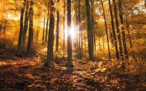 Picture autumn, forest, leaves, the sun, rays, light, trees, nature, Park, mood, trunks, foliage, positive, yellow, …