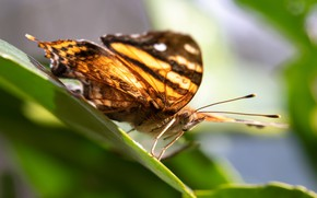 Picture macro, light, butterfly, leaf