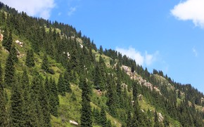Picture forest, the sky, landscape, mountains, ate