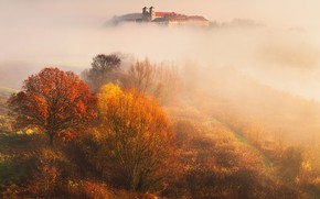 Picture autumn, leaves, trees, fog, Nature, Bieganski Patrick