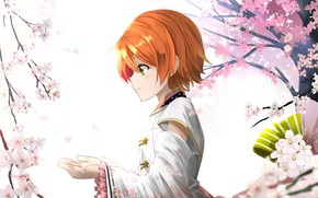 Picture girl, spring, Sakura, the cherry blossoms
