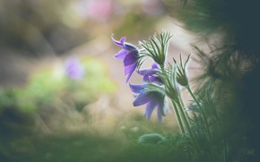 Picture leaves, flowers, background, glade, blur, lilac, bokeh, cross
