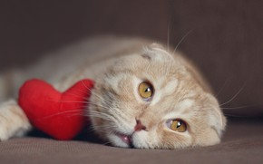 Picture cat, cat, face, heart, fold, red, lies