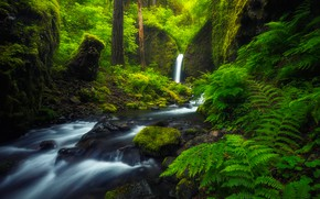 Picture forest, river, stream, waterfall, Oregon, fern, Oregon, Columbia River Gorge, Mossy Grotto Falls, Ruckel Creek, …