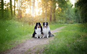 Picture dogs, nature, friends