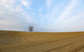 Picture field, nature, tree, arable land