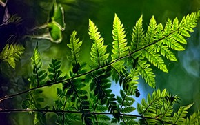 Picture greens, summer, light, rendering, background, picture, fern leaves