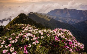 Picture forest, leaves, clouds, landscape, flowers, mountains, nature, fog, overcast, hills, tops, spring, slope, Asia, Taiwan, …