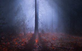 Picture forest, night, nature, fog