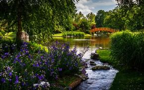 Picture greens, grass, the sun, trees, flowers, bridge, pond, Park, stones, USA, the bushes, Missouri Botanical …