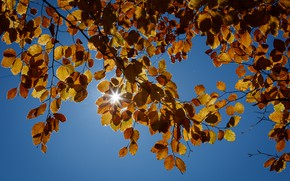 Picture autumn, the sky, leaves, rays