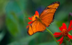 Picture macro, flowers, butterfly, orange, red, green background