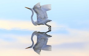 Wallpaper bird, reflection, flight, water, Heron