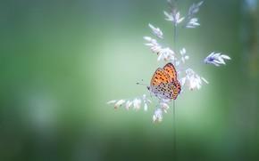 Picture butterfly, plant, butterfly, bokeh