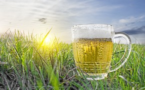 Picture field, the sky, grass, the sun, dawn, beer, mug
