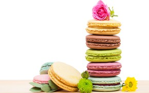 Picture rose, cookies, colorful, macaroon