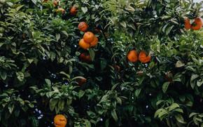 Picture green, orange, mandarin