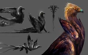 Picture background, bird, Griffin