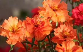 Picture flowers, bright, bouquet, orange, bokeh