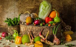 Wallpaper harvest, pumpkin, still life, vegetables, autumn, still life, pumpkin, vegetables, harvest