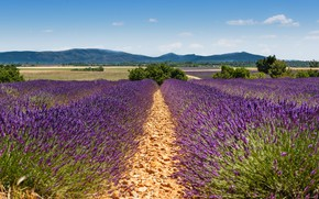 Picture field, summer, the sky, clouds, trees, flowers, mountains, nature, France, a lot, the ranks, lavender, …