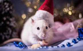 Picture look, light, red, pose, background, holiday, food, legs, blur, lights, mouse, mouse, muzzle, New year, …