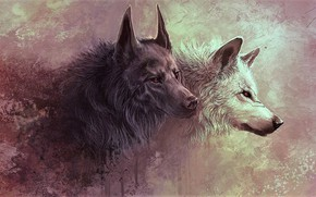 Picture animals, animals, wolves