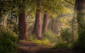 Picture forest, summer, trees, landscape, nature, path, Andrei, Shatura