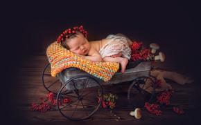 Picture berries, mushrooms, sleep, girl, truck, wreath, baby, Rowan, sleeping