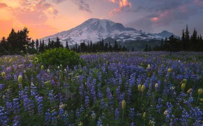 Picture field, forest, the sky, clouds, flowers, mountains, glade, tops, the evening, ate, meadow, snow, lilac, ...