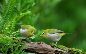 Picture leaves, birds, nature, pair, snag, white eye, белоглазка трельщица