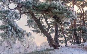 Picture winter, frost, trees, landscape, nature, Park, pine, the bushes, South Korea