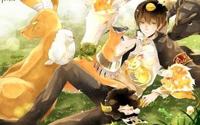 Picture animals, animals, guy, Katekyo Hitman reborn, Hibari Kyoya, Teacher mafia Reborn