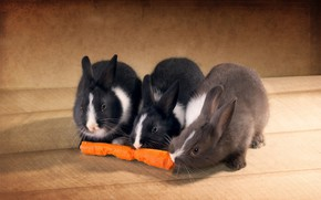 Picture rabbits, on the floor, carrots, three, bite