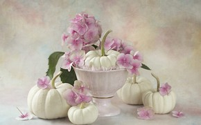 Picture flowers, bouquet, pumpkin, vase, pink, white, still life, hydrangea, composition, vase, ceramics