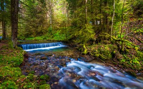 Picture greens, autumn, forest, leaves, stream, for, waterfall, moss, ate, river