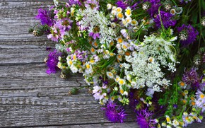 Picture background, Board, Bouquet, Wild flowers