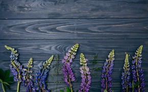 Wallpaper flowers, background, wood, flowers, purple, lupins, lupine