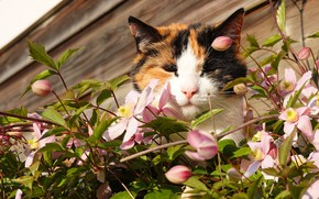 Picture cat, face, flowers