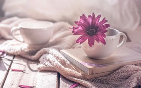 Picture flower, style, books, petals, Cup, mugs, osteospermum