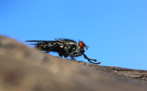Picture macro, fly, background