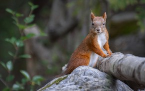 Picture forest, nature, stone, protein, log, animal, rodent
