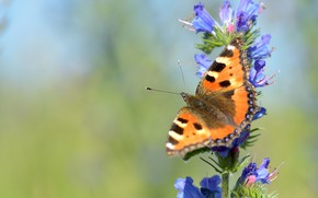 Picture summer, macro, flowers, green, background, butterfly, blue, insect, red, blue, urticaria