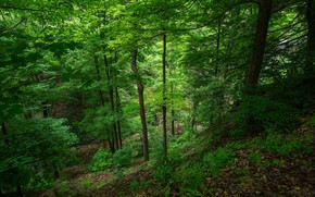 Picture greens, forest, trees, stream, waterfall, Canada, Ontario, Felker's Falls Conservation Area
