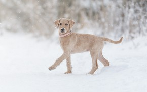 Picture winter, snow, dog, puppy