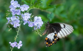 Picture flower, butterfly, wings
