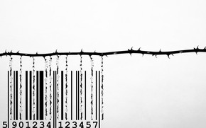 Picture background, rose, barcode