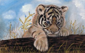 Picture weed, tiger, colored pencils